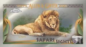 Safari Sights Lion MOCK UP